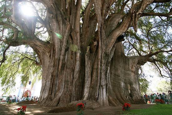 树 ต้นไม้